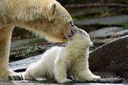 Eisbärmutter Tonja und die noch namenlose Kleine zeigten sich gestern den Zoobesuchern. (Bild: Clemens Bilan/EPA, Berlin, 15. März 2019)