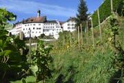 Die gut besonnte Lage des Rebbergs in Lichtensteig begünstigt die Qualität des Weines. (Bild: Urs M. Hemm, 26. September 2018)
