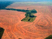 Die Abholzug des Regenwaldes in Brasilien hat seit dem Amtsantritt von Präsident Jair Bolsonaro weiter zugenommen. (Bild: KEYSTONE/AP/ALBERTO CESAR-GREENPEACE)