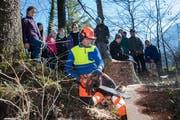 Oberstufenschüler von Wolfenschiessen verbringen den Schultag im Wald. Hans Odermatt zeigt, wie man einen Baum fällt. (Bild: Eveline Beerkircher (Wolfenschiessen, 21. März 2019))
