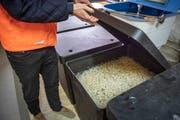 Drei biologische Filter reinigen das Abwasser von den Fischen und wandeln Ammoniak in Nitrat um. (Bild: Urs Bucher)