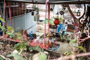Den Bauplänen weichen müssen vermutlich die Familiengärten; einige davon wurden bereits für den Bau des Ruckhaldetunnels aufgehoben. (Bild: Adriana Ortiz Cardozo, 25. März 2019)