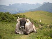 Kühe ruhen fast nur in Bauchlage, weil das für ihre Verdauung unabdingbar ist. Andere grosse Säugetiere schlafen eher auf der Seite. (Bild: KEYSTONE/ARNO BALZARINI)