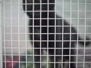 Die Thurgauer Behörden haben in Müllheim eine private Tierhaltung wegen hoch prekärer Haltungsverhältnisse geräumt. 21 Katzen lagen tot in einem Gefrierschrank. (Bild: KEYSTONE/GAETAN BALLY)