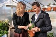 Das Futtergras der Zukunft? Juanita Schläpfer (links) und Viola Thiel im Klimagarten an der HSR. (Bild: Adriana Ortiz Cardozo)