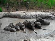 In dieser Schlammgrube in Thailand sassen während Tagen sechs Elefantenbabys fest. Nun wurden sie von Rangers gerettet. (Bild: KEYSTONE/AP Department of Natural Park, Wildlife Plant Conservat)