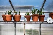 Auch Wiesen- und Gartenpflanzen sind Teil des Klimagartens.
