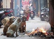In Gesellschaft wärmt es sich besser. (Bild: Raminder Pal Singh/Keystone (Indien, 10. Februar 2019))