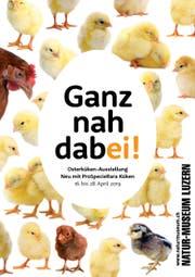 Plakat zur Osterküken-Ausstellung 2019. (Bild: PD)