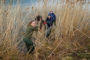 Mit vollem Einsatz putzen diese Jugendlichen das Sachsler Ufer des Sarnersees. (Bilder: Primus Camenzind (9. April 2019))