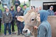 35 Tiere wurden gestern den potenziellen Bietern vorgeführt. (Bild: Fabio Vonarburg (Horben))