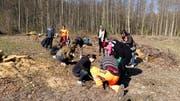 Auf einem Feld im Wald pflanzten die Jugendlichen junge Eichen. (Bild: PD)