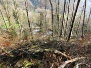 In diesem Waldstück oberhalb Glarus ereignete sich der tödliche Arbeitsunfall. (Bild: Kapo GL)