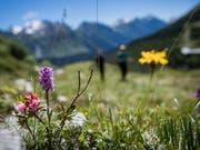 Zuhause ist es am schönsten: Graubünden, das Wallis und das Tessin sind die Lieblingsferienziele der Schweizerinnen und Schweizer. (Bild: KEYSTONE/TI-PRESS/GABRIELE PUTZU)
