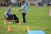 Arbeit mit dem Hund auf dem Gelände des Kynologischen Vereins.