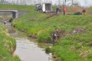 Einige Fischerverein-Mitglieder arbeiten im Wasser, andere bündeln Holz am Ufer des Giessens bei der Brücke in Amlikon. (Bilder: Mario Testa)