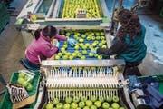 Handarbeit ist bei der Früchteverarbeitung trotz Digitalisierung noch immer unersetzbar. (Bild: Reto Martin)