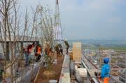 Die Bäume und die Säcke mit Substrat für das Dach werden mit einem Kran angeliefert. (Bild: PD/Zug Estates)