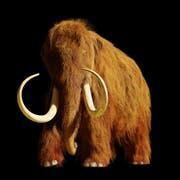 Wie lange bleiben Mammuts noch ausgestorben? Bild: Getty
