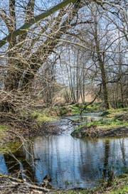 Das Naturschutzgebiet erstreckt sich über 3,9 Hektaren. (Bild: Andrea Stalder)