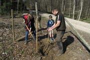 Pascal Epper beaufsichtigt die Baumpflanzung. (Bild: PD)