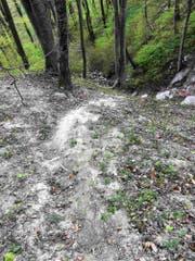 Aus noch unbekannten Gründen rutschten die beiden Wanderer auf dem harten, trockenen und mit Wurzeln durchzogenen Lehmboden aus. (Bild: Kapo SG)