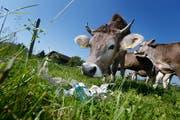 Weggeworfener Abfall wie Getränkedosen, Glas oder PET können eine Gefahr für Tiere sein. (Bild: Stefan Kaiser)