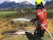 Etwa eine Stunde brauchten die Feuerwehrleute, die Flammen auf dem Erdbeerfeld zu löschen. (Bild: Kapo GR)