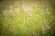 Eine Blumenwiese in Boltshausen, Ottoberg. (Bild: Reto Martin)