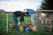 Basisausbildungen für Flüchtlinge – etwa in der Landwirtschaft – zeigen Wirkung. (Bild: Gian Ehrenzeller/Keystone (Schwarzenbach, 24. April 2019))