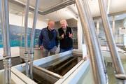 «Tag des Fisches» im Fischereimuseum Zug: Rolf Krieg (rechts), Ehrenpräsident erklärt Ruedi Keiser das Langstrombecken.(Bilder: Roger Zbinden, Zug, 27. April 2019)