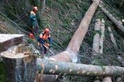 Forstfachleute im Einsatz für den Urner Wald. (Bild: PD)