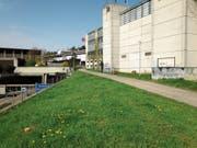 Der Fuss- und Radweg zwischen Olma-Halle 1 und Autobahn: Die bis vor kurzem hier stehenden Bäume sind gefällt, bereits im Mai sollen hier Baumaschinen auffahren. (Bild: Reto Voneschen (22. April 2019))