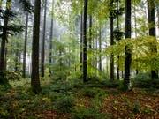 Das Blätterdach im Wald hält die Hitze zurück. (Bild: KEYSTONE/ALEXANDRA WEY)