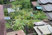 Blick in die Familiengärten an der Ruckhalde. Ihre Tage sind angesichts der Neubaupläne am Hang zwischen Oberstrasse und Riethüsli gezählt. (Bild: Reto Voneschen - 25. August 2018)
