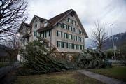 «Burglind» brachte selbst den Weihnachtsbaum beim Wohnhaus Mettenweg zu Fall. (Bild: Corinne Glanzmann, Stans, 3. Januar 2018)