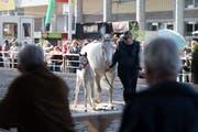 Auch Pferde haben seit vielen Jahren ihren festen Platz an der Offa in St.Gallen. Bild: Michel Canonica (St.Gallen, 11. April 2018)
