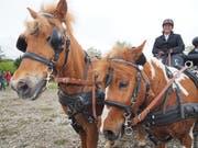 Auch das gibt es: Zweispänner mit Ponys. (Bilder Jörg Roth)