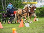 Der Parcours fordert von den Fahrern und Pferden viel Konzentration und Erfahrung.