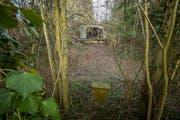 Ein Bild aus früheren Tagen: Der Wald und die verlotterten Baracken auf der Stadtparzelle an der Irseestrasse. Heute ist das Gelände gerodet. (Bild: Reto Martin)