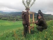 Samuel Schnell, Stefan Henggeler und Reto Rust (von links) bringen auf dem Klosterhof im Gubel einen Schutz für einen jungen Obstbaum an. (Bild: Charly Keiser, Menzingen, 11. Mai 2019)