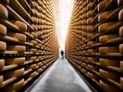 Er findet seit zehn Jahren zunehmenden Absatz: Schweizer Käse, hier Greyerzer in einem Keller in Charmey FR. (Bild: KEYSTONE/JEAN-CHRISTOPHE BOTT)
