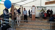 Die Landwirte zeigten einige Tiere. (PD)