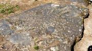 Der Hexenstein von Scuol-Tarasp, die Platta da las Streas, ist mit kleinen Schalen übersät. (Bild: Thomas Widmer)