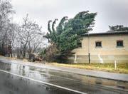 Orkan Burglind fällte Bäume, wie hier in Frauenfeld, und hinterliess auch sonst ein Bild der Verwüstung. (Bild: Samuel Koch, 3. Januar 2018)