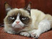 Die Internet-Katze «Grumpy Cat» ist tot. Sie wurde sieben Jahre alt. (Bild: Keystone/AP Nestle Purina PetCare)
