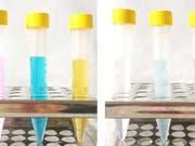 Simsalabim: Links durch Problemstoffe verunreinigtes Wasser, rechts nach der Behandlung mit Nanoparikeln. (Bild: ETH Zürich / Fajer Mushtaq)
