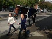 Ein Voltigierpferd wird am Sonntagnachmittag von seinen beiden jungen Betreuerinnen am Rand der Kreuzbleiche bewegt. (Bild: Reto Voneschen - 19. Mai 2019)