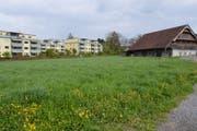 Die Scherermatte in Hochdorf: Auf dieser Wiese sollen Parkplätze entstehen. (Bild: Ernesto Piazza, Hochdorf, 2. Mai 2019)