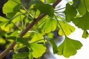 Der «Baum der Erkenntnis» soll gegen Depressionen helfen.